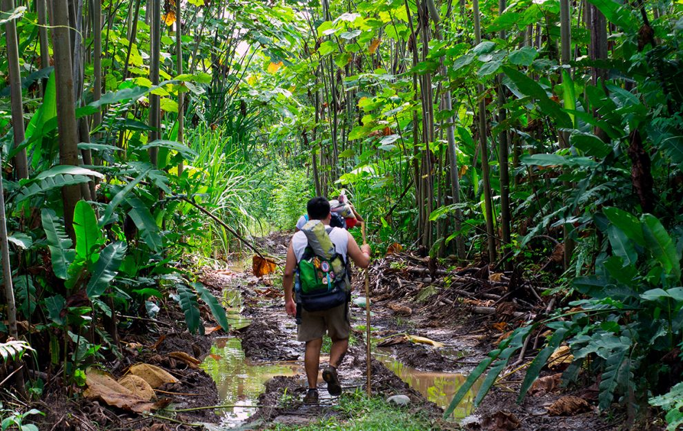 Tips Para Sobrevivir En La Selva
